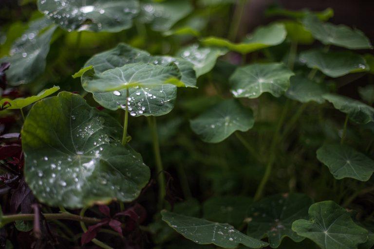 טבע וחומרי גלם- ״חמש״